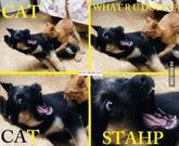 Stahp!